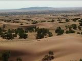 漠北神草肉苁蓉3万亩夏季种植基地1
